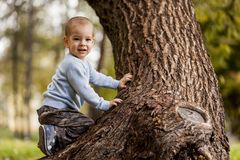 Little boy on the tree Stock Image