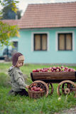 Little boy, with a trolley full of apples Stock Image