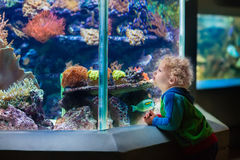 Little boy at tropical aquarium Stock Photo
