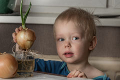 Little boy with two bulbs of fresh onions Stock Photo