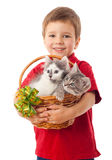 Little boy with two kittens in basket Royalty Free Stock Image