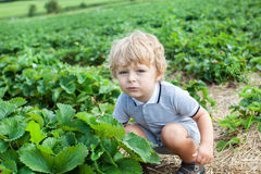 Little boy two years on strawberry farm Royalty Free Stock Images