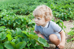 Little boy two years on strawberry farm Royalty Free Stock Photos