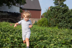 Little boy two years on strawberry farm Stock Images
