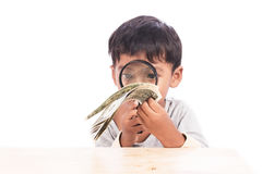 Little boy use magnifier looking money Stock Photos