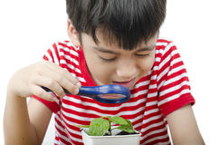 Little boy using magnifier watching new plant on white Royalty Free Stock Photography