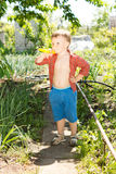 Little boy in the vegetable garden Stock Images
