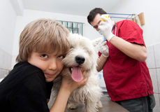 Little boy at vet with his dog. Little boy holding his Westie while the veterinarian is preparing to give a vaccine Stock Images