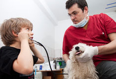 Little boy at vet with his dog Royalty Free Stock Image