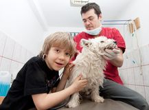 Little boy at vet with his dog Stock Images