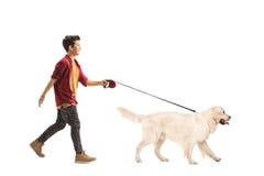 Little boy walking a dog. Full length portrait of a little boy walking a dog isolated on white background Royalty Free Stock Photography