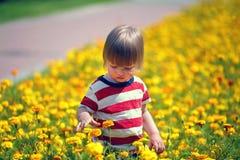 Little boy walking on a flowering lawn stock images