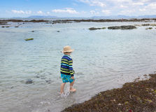Little boy walking through shallow sea water next to washed up s Royalty Free Stock Photo