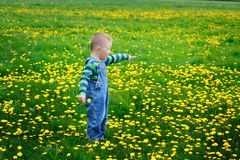 Little boy walks in the blossoming spring meadow Stock Image