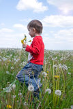 The little boy walks on a field Stock Photos