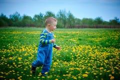 Little boy walks on a meadow Stock Photo