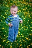 Little boy walks on a meadow Stock Image
