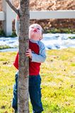 Little boy wanting to climb a tree royalty free stock photo