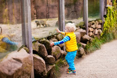 Little boy watching animals at the zoo Royalty Free Stock Images