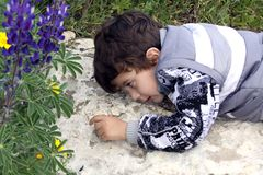 Little boy watching ants Stock Photos