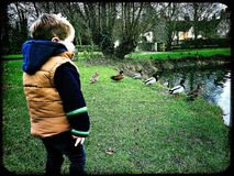 Little boy watching ducks by a duck pond. Duck pond on a village green Stock Images