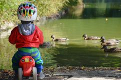 Little boy is watching ducks in the lake Stock Photography