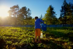 Little boy watering plants in garden at summer day Stock Images