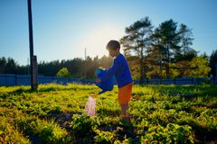 Little boy watering plants in garden at summer day Royalty Free Stock Photography