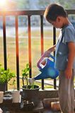 Little boy watering trees and flowers in morning royalty free stock photography
