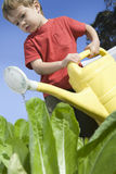 Little Boy Watering Vegetable Garden Royalty Free Stock Images
