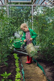 Little boy watering the vegetables in Greenhouse. Garden Royalty Free Stock Photography