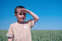 Little boy on wheat field Royalty Free Stock Photography