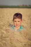 Little boy in wheat field Stock Image