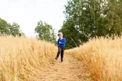 Little boy on a wheat field stock images
