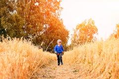 Little boy on a wheat field royalty free stock photo