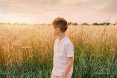 Little boy in a wheat field Stock Image