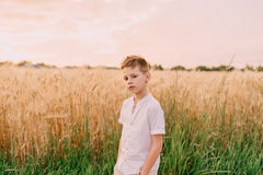 Little boy in a wheat field Stock Images