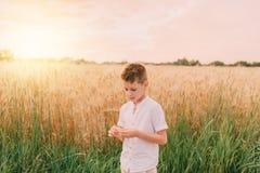 Little boy in a wheat field Royalty Free Stock Photo