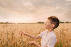 Little boy in a wheat field Royalty Free Stock Photos