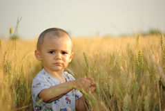 Little boy in wheatfield Stock Images