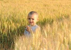 Little boy in wheatfield Royalty Free Stock Photography