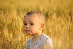 Little boy in wheatfield Stock Photos