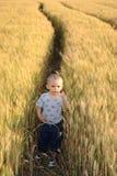 Little boy in wheatfield Stock Image