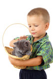 Little boy who pet a gray kitty in wicker Stock Photography