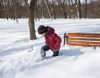 Little boy in a winter park Royalty Free Stock Photos