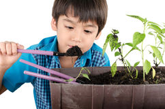 Little boy working with gardening Stock Image