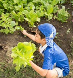 Little boy working planting in the farm outdoor Stock Photography