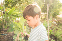 Little boy working planting in the farm outdoor Stock Photos