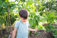 Little boy working planting in the farm outdoor garden Stock Photo