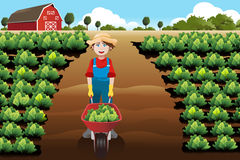 Little boy working in a vegetable farm Stock Images